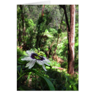 Wild Passiflora in the Hawaiian rain forest. Card