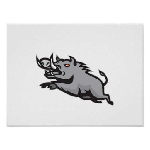 Wild Pig Boar Jumping Isolated Poster