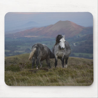 Wild Ponies Mouse Pad