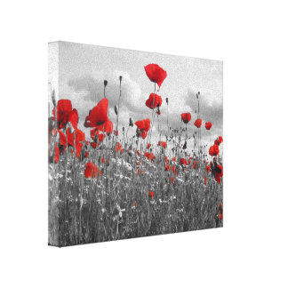 Wild Poppies in Black, White and Red Canvas Print