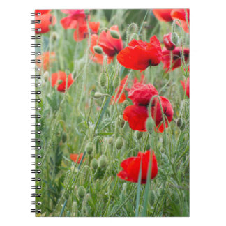 Wild poppies spiral notebook