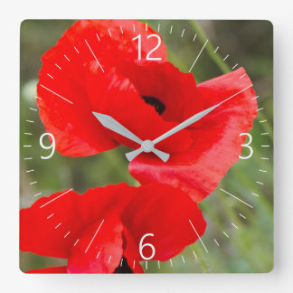 Wild poppies square wall clock