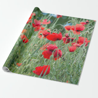 Wild poppies wrapping paper
