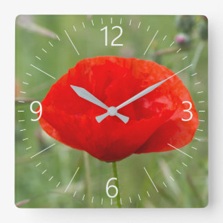 Wild poppy square wall clock