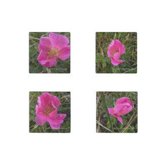 Wild Prairie Rose set of 4 Magnets