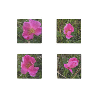 Wild Prairie Rose set of 4 Magnets Stone Magnets
