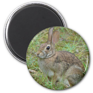 Wild Rabbit Eastern Cottontail II Apparel & Gifts Magnet