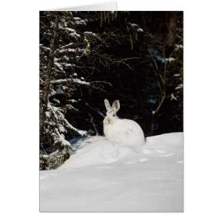 Wild Rabbit In Snow Greeting Card