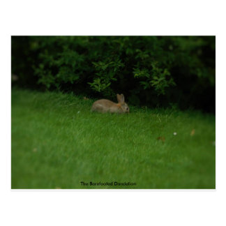 Wild Rabbit - Postcard