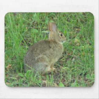 Wild  Rabbit Resting Mouse Pad