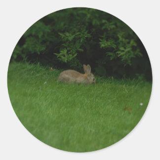 Wild Rabbit - Stickers