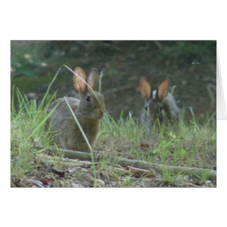 Wild Rabbits Eastern Cottontail Pair Apparel Gifts Card