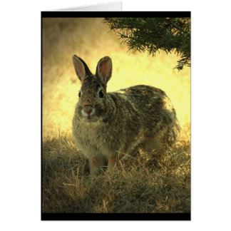 Wild Rabbits Greeting Card