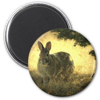 Wild Rabbits Round Magnet