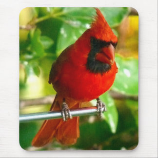 Wild Red Cardinal in Hawaii Mouse Pad