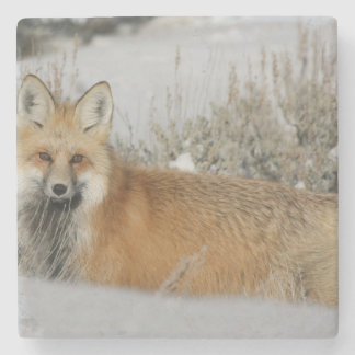 Wild Red Fox Stone Coaster