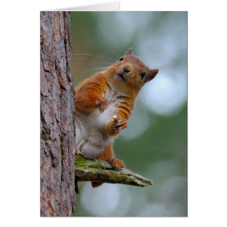 Wild Red Squirrel Scottish Highlands Photo Blank Card