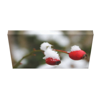 Wild Rose Berries Canvas Print