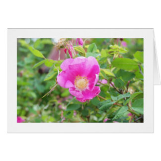 Wild Rose Card