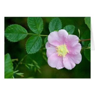 Wild Rose Pink Blank Card