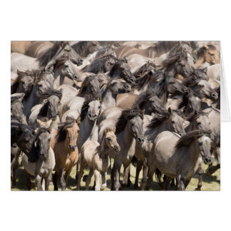 Wild Run - Wild Horse Greeting Card