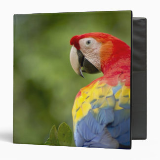 Wild scarlet macaw, rainforest, Costa Rica 3 Ring Binders