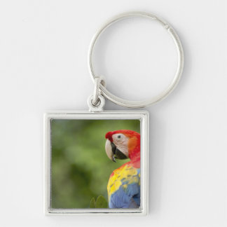 Wild scarlet macaw, rainforest, Costa Rica Keychain