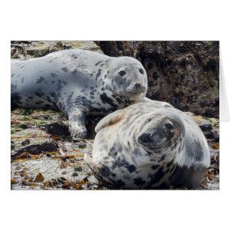 Wild Seal Card