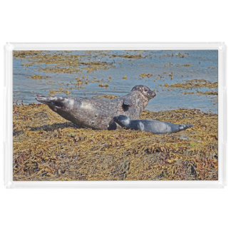 Wild Seal with Pup Animal Scottish Highlands Acrylic Tray
