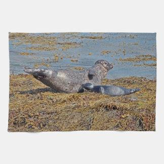 Wild Seal with Pup Animal Scottish Highlands Kitchen Towel