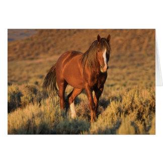 Wild Sorrel Stallion at Dawn Wild Horse Card