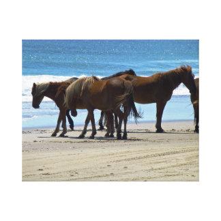Wild Spanish Mustangs Canvas Print