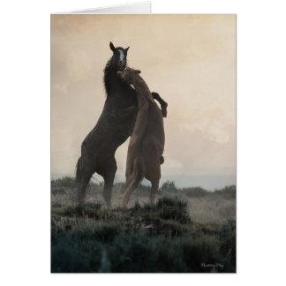 Wild Stallions Note Cards