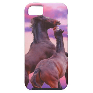 Wild stallions playing iPhone 5 Case