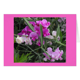 wild sweet peas card