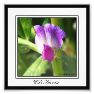 Wild Sweetie Photo Art