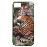 Wild Tiger Print collection iPhone 5 Cover