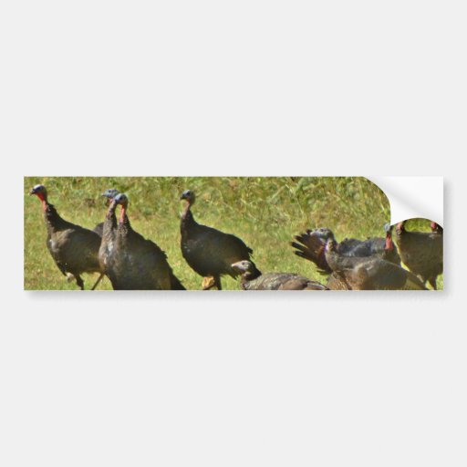 Wild Turkey, Camouflage colors Bumper Stickers