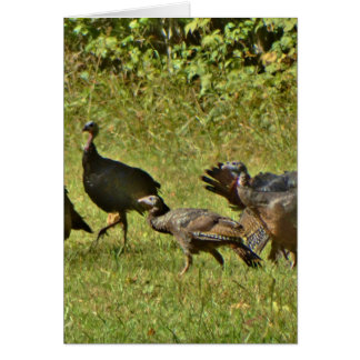 Wild Turkey, Camouflage colors Cards