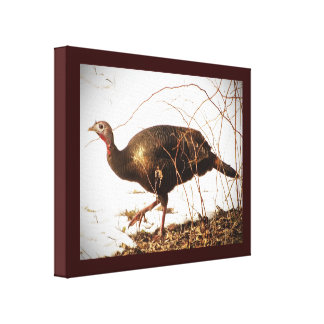 Wild Turkey Canvas Print