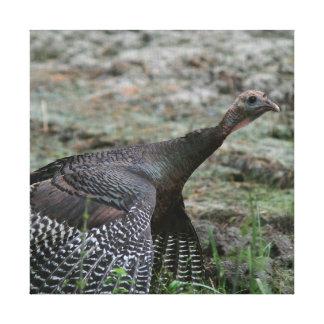 Wild Turkey, Wrapped Canvas Print.