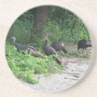 Wild Turkeys Coaster