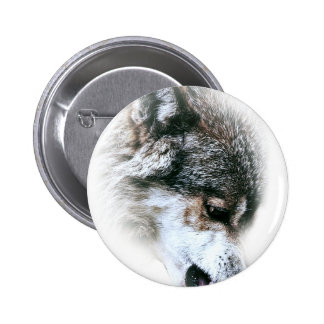 Wild Wolf Face Angry Eating 2 Inch Round Button