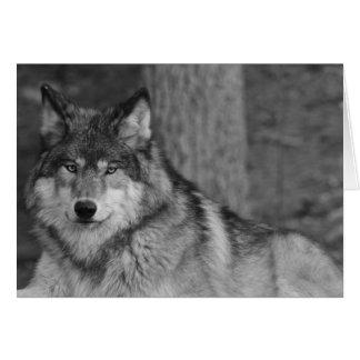 Wild Wolf Note Card