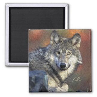 Wild Wolf Square Magnet