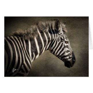 Wild Zebra Card