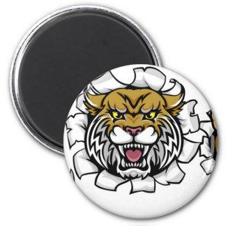 Wildcat Holding Baseball Ball Breaking Background Magnet