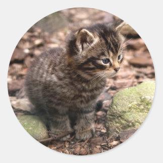Wildcat Kitten Classic Round Sticker