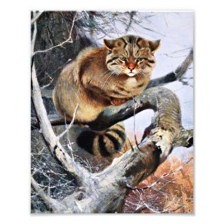 Wildcat Vintage Artwork Photo Print