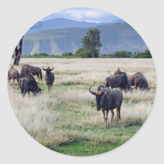 Wildebeest herd classic round sticker
